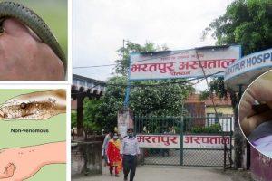 भरतपुर अस्पतालमा वर्षायामको समयसँगै सर्पदंशका बिरामीको संख्यामा बृद्धि